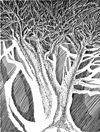 A tree in pen and ink