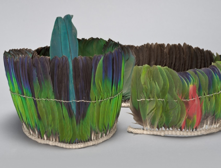 Take Wing: Feathers through the lens of conservation